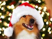 xmas-pups-ar-dogPACER